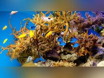 Океанариум 2019-12-31T23:59