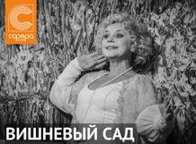 Вишневый сад 2019-03-13T19:00 поздняя любовь 2019 03 13t19 00