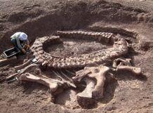 Палеонтология<br>