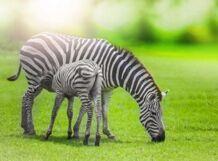 Игровой маршрут «Квест по зоопарку KIDS» от Ponominalu